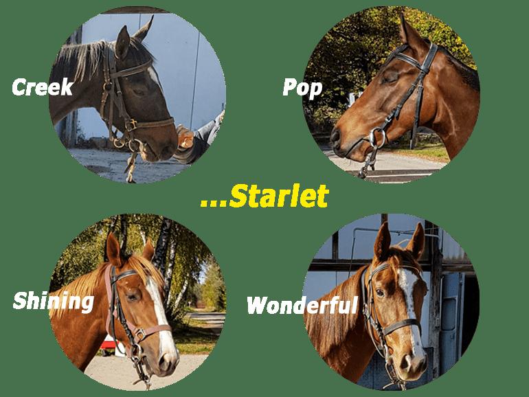ElSur Racing Starlets