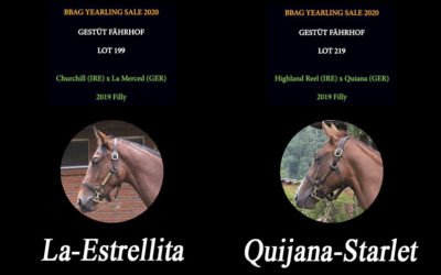 BBAG YEARLING SALE 2020