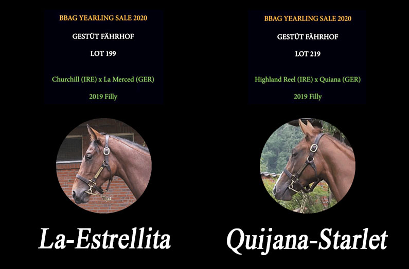 2020 BBAG YEARLING SALE