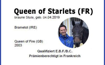 Queen of Starlets – Unser Neuzugang