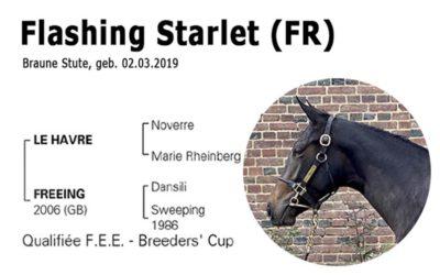 Flashing Starlet – unsere Jüngste im Stall