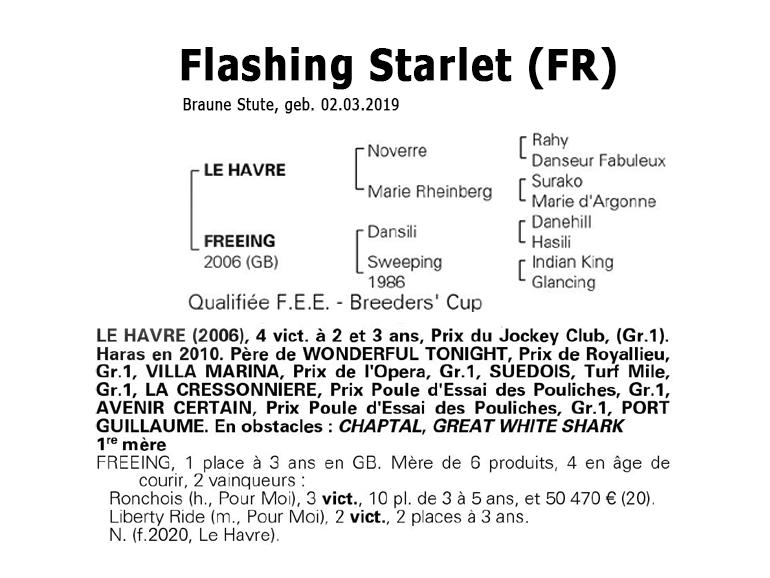 Flashing Starlet family tree