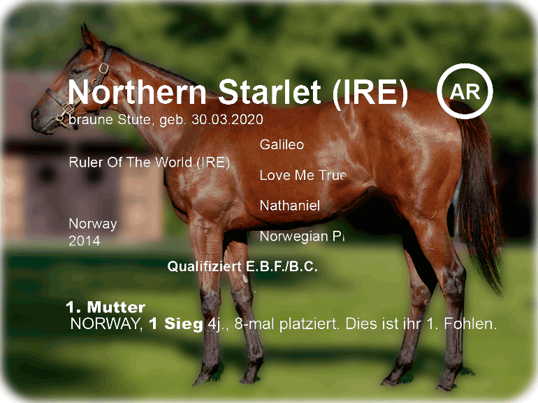 """We are looking forward to """"Northern Starlet"""""""